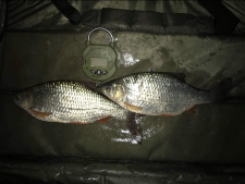 2lbs8 Caught by Darryn Stolworthy