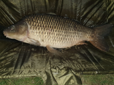 28lbs4 Caught by Mark Howes